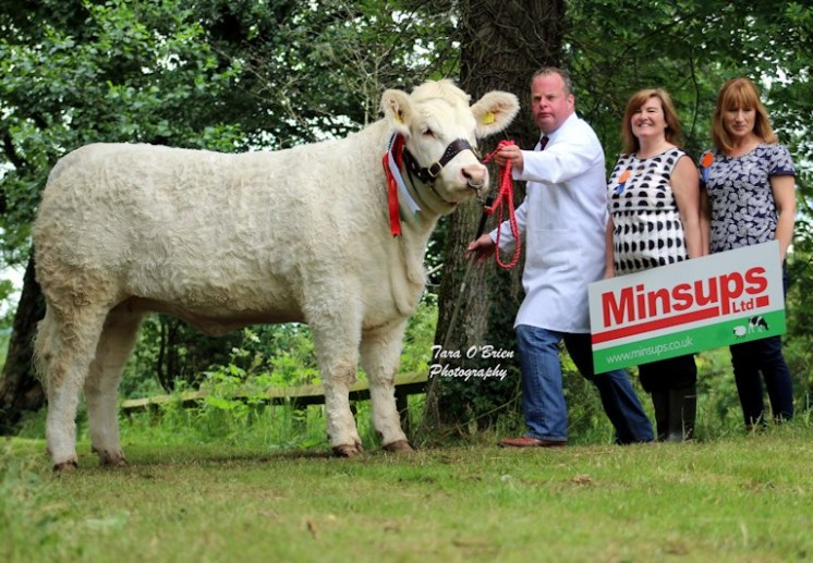 Reserve Senior Heifer Champion – WD & JA Connolly – Brigadoon Lady