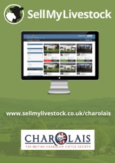 Charolais small advert_001