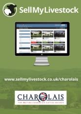 Charolais small advert_001