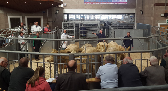 Ian MacCrae selling his Charolais cross calves at UA Stirling on Monday, which averaged over £1000, topping at £1080.