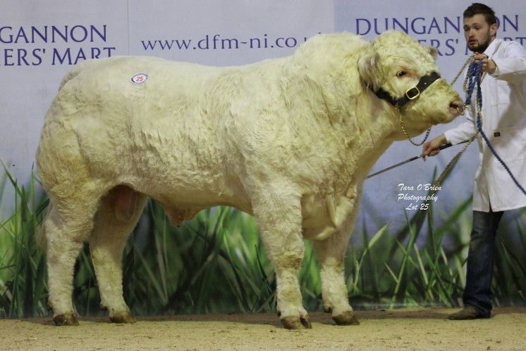 Ballyoak Lazard at 3,700gns