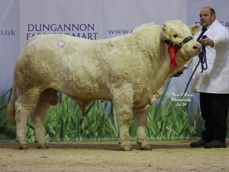 Burnside Lightning at 3,800gns
