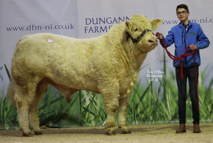 Drumilly Legend at 4,100gns
