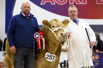 Paul Stobart presenting Wilson Peters & Honey Dime the prize for first placed Charolais and Continental Heifer