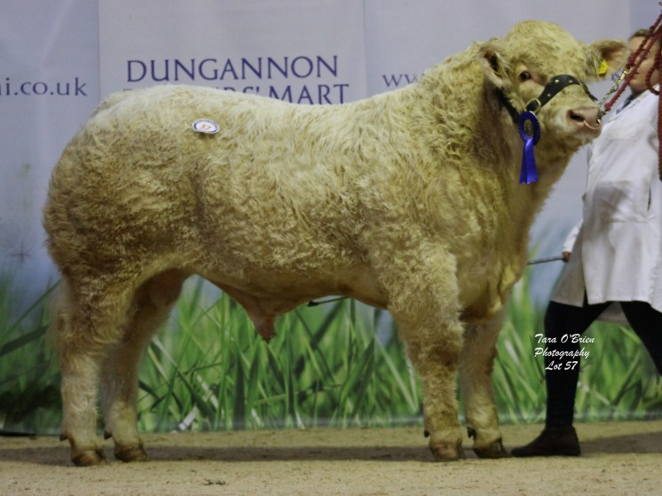 Ratoary Lancer ET at 3,500gns