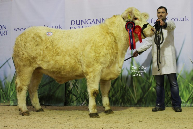Reserve female champion Moorlough Joanna at 2,500gns