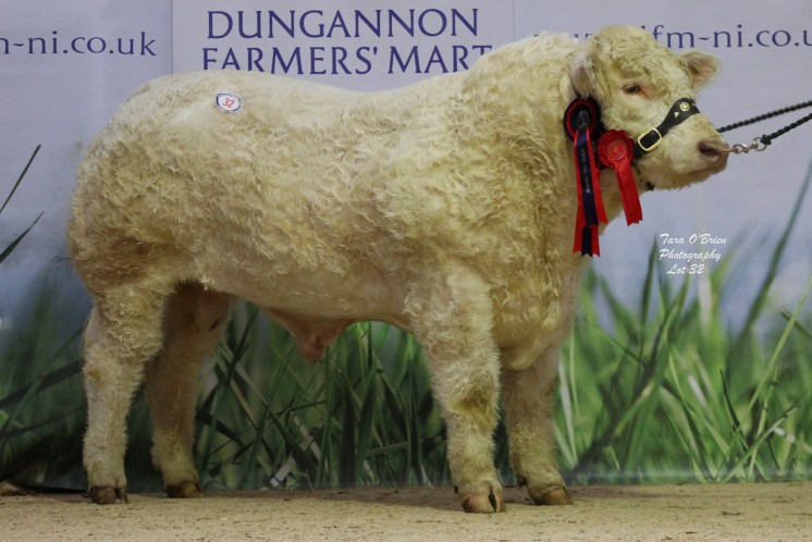 Reserve supreme champion - Coolnaslee Lamarr at 4,100gns