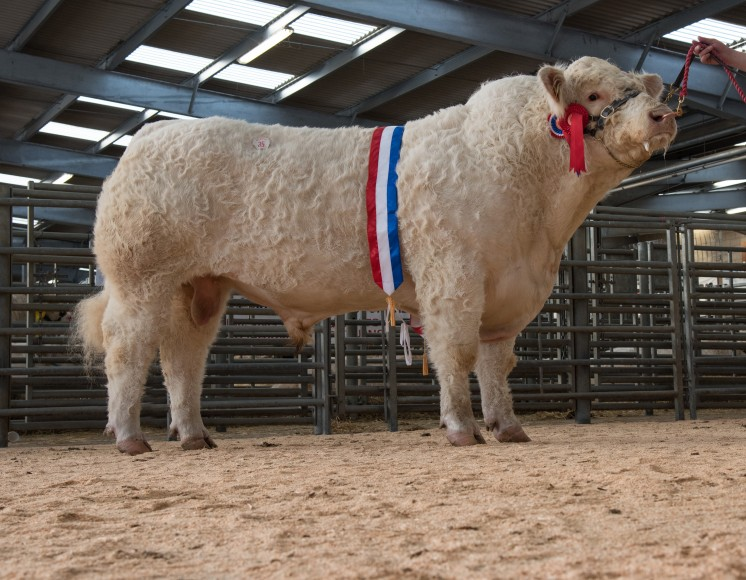 Supreme champion Graiggoch LAd
