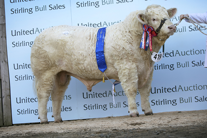 Intermediate Champion Battleford Laser - 11,000gns