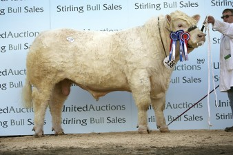 Reserve Supreme & Reserve Senior Champion Gretnahouse Lord - 25,000gns