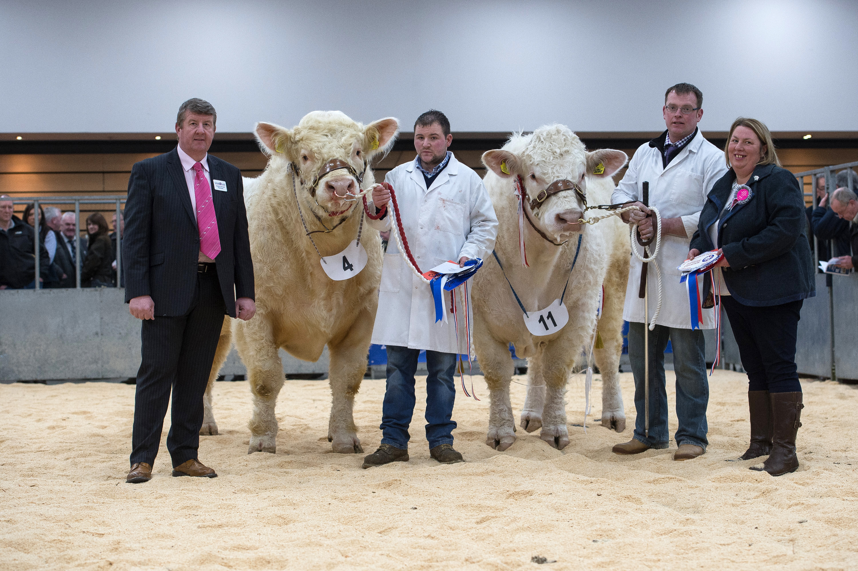 Overall champion Strathys Lionheart and Reserve champion Kinclune Laurent, Andrew Hornall,Stuart Allan, Kevin Mallarkey and Judge Tracey Nicol