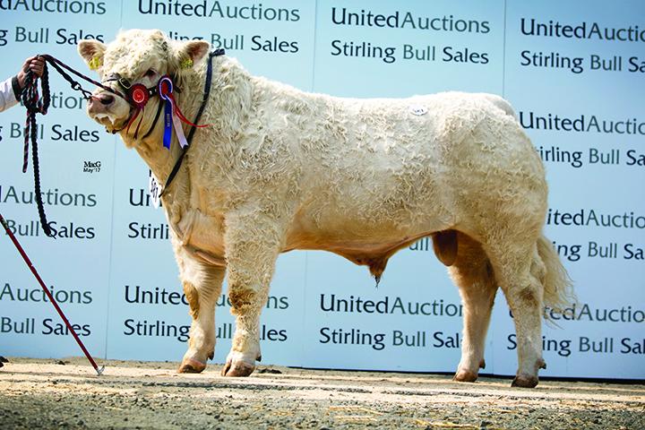 Champion & Top Price Elgin Lochness - 8,500gns