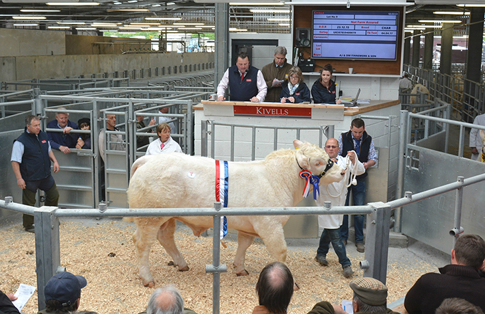Champion and Top Price Polgoda Legend - 3,500gns
