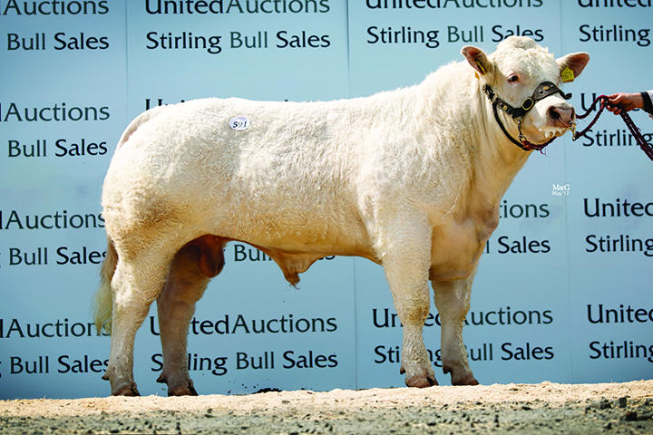 Goldies Lionel - 5,800gns