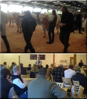 Welsh Regional Stockjudging - web