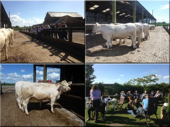 Yorkshire Stockjudging - web