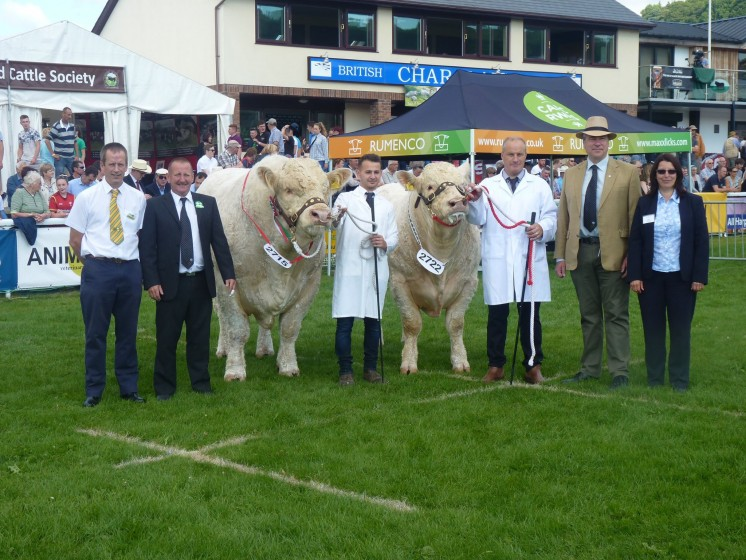 Male champion Goldies Jerry and reserve male champion Moelfre Magic