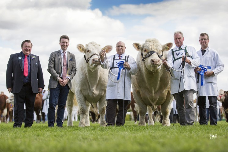 Continental Interbreed Beef Pairs Reserve Champions