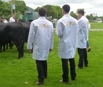 Beef Stockjudging