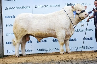 Tweeddale Maximum - 9,000gns