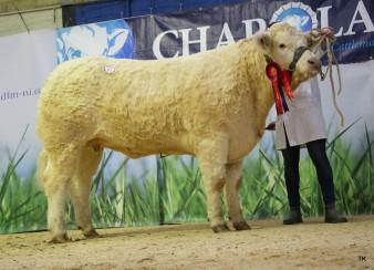 Female Champion,  Battleford Lola ET for Barley Finnegan.  Sold £8,000