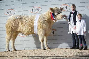 Holstead Lottie - 3,800gns - Reserve Female Champion