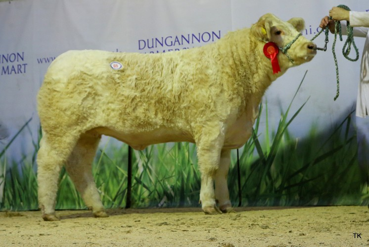 Reserve Female Champion Burnside Miedi for Mcallister & Sons