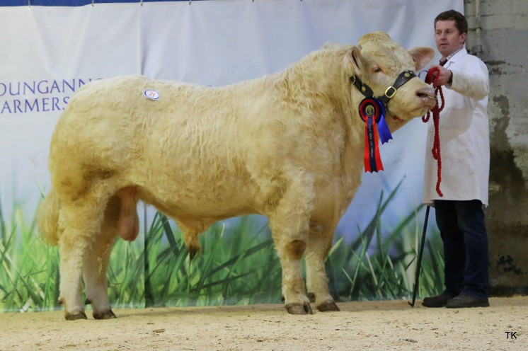 Reserve Senior Champion for Gary Henderson with Sanelford Mason. Sold $5,200