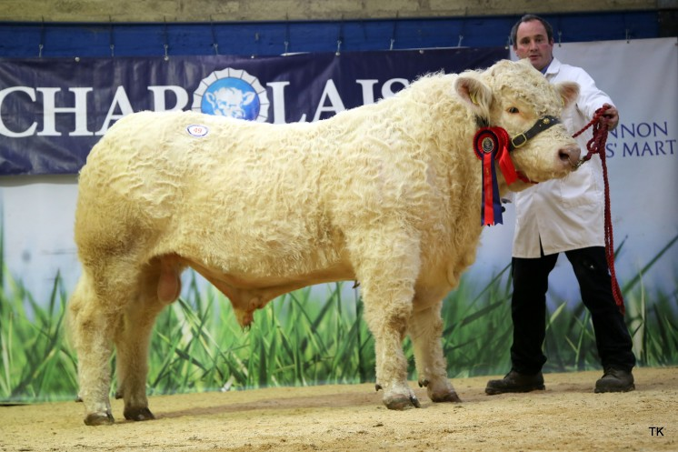 David Bothwell with Junior Champion & Reserve Overall Champion Killadeas Magnet.