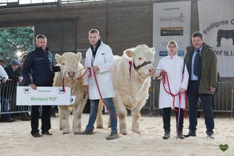 Senior Champion Hollywell Mojito and Reserve Senior Champion Currins Maddie with sponsor MSD Bovipast RSP and judge Neil Blyth